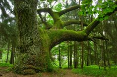 bäume bilder   Auf spezielle Themen wie jahreszeitlicheVeränderungen, Photosynthese ...