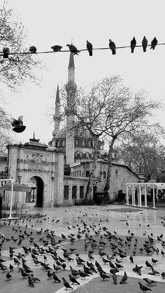 Eyup Mosque Istanbul go see the mosque than take the cable car to enjoy à coffee and the view at bar Lotti and than wander down through the beautiful cementery with à view Sacred Architecture, Go See, Wander, Paris Skyline, Cable, Sultan, Mosques, Istanbul Turkey, Explore