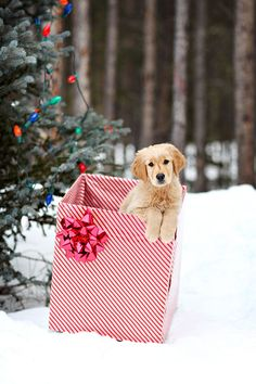 the perfect present!