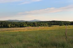 Paysage de campagne - Brome-Missisquoi   Flickr - Photo Sharing! Mountains, Nature, Travel, Landscapes, Wine, Naturaleza, Viajes, Destinations, Traveling