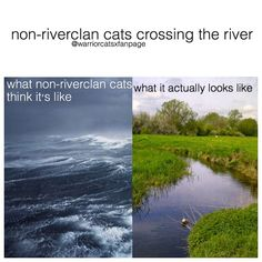 Non-RiverClan cats crossing the river