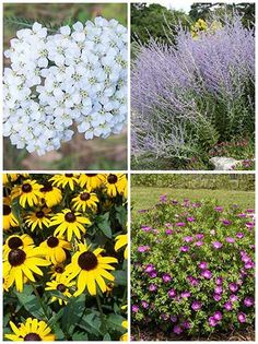 12 Long Blooming Plants You'll Love What's the point of planting if your plants die within weeks or months? If you're going through all the trouble of digging up your garden you might as well plant something with a little endurance, something that's willing to sprout all over again once the bitter winter frost has passed. These twelve plants could very well be your next long-lasting perennial. 1. Moonbeam (Coreopsis) If we're being honest, this one's first because I love its name. Moonbeam…