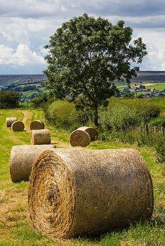 THE  The sweet smell of fresh cut hay.....ahhhhh!!!