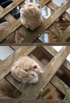 """""""tkr:  どうして猫は隙間に入りたがるのか 「タンスの隙間」をおもちゃ化:ワロタニッキ  """""""