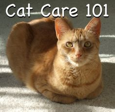 Cat Care 101..... Might as well start now...my cat lady days aren't too far ahead of me. #catladyproblems #foreveralone