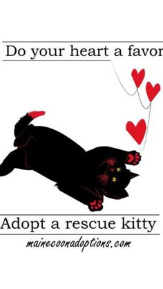 Do Your Heart a Favor, Adopt a Maine Coon Cat!   MaineCoonAdoptions.com  ***** We are an all-volunteer, nonprofit, no-kill cat rescue group in Oakland, California.