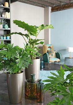 feng shui pflanzen wohnzimmer wohnideen