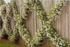 Living Fence Plants and Ideas                                                                                                                                                     More