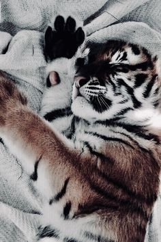 ☾ ωe αll нαve secяeтs // J A Z ♡ ☽ – Jess - Baby Animals Cute Creatures, Beautiful Creatures, Animals Beautiful, Cute Baby Animals, Animals And Pets, Funny Animals, Cute Animal Pictures, Animal Photography, Vintage Photography