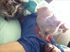 My three cats helping me wake up on Sunday morning. From left to right it's Sara, Preston and Parker. Jessica was warming in the window.