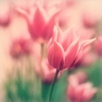 104 best flowers in pastel colors images on pinterest flores pink soft pink pink pink soft pastels pink and green pastel pink pastel colors pastel flowers pink tulips pretty flowers mightylinksfo