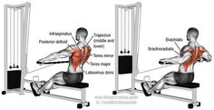 A compound pull exercise. There is no specific target muscle. Your Latissimus Dorsi, Teres Major, Erector Spinae, Rhomboids, Midd. Good Back Workouts, Back Exercises, Gym Workouts, Mens Fitness, Fitness Tips, Fitness Motivation, Workout Fitness, Cable Workout, Cable Row