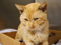 GARFIELD - A1092334 - - Manhattan  ***TO BE DESTROYED 10/08/16*** POOR GARFIELD NEEDS A COMPETENT VET TO HELP HIM AND NEEDS A HOME TO HEAL IN! This 7 year old has some health issues including cold symptoms and weakness when standing – needs support! A vet needs to give this guy a full workup as there are a couple things that can be the problem. He's anemic as well which really doesn't help his balance and he just needs someone to FOSTER OR ADOPT him! If yo