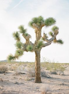 Joshua Tree. I had no idea how sharp these guys are until I got poked by one. Maybe one does not need to hug this tree! LOL