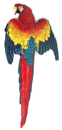 + Handcut from recycled steel drums in Haiti in Haiti + Hand painted metal wall decor + Hang indoors or outdoors Realistically hand painted scarlet macaw wall hanging. This has been hand cut, with ham