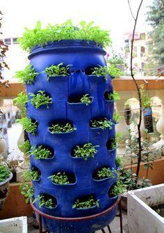 growing vegetables, plastic barrel ideas, drums