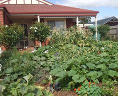 55 Best Permaculture Backyard Gardens Images 400 x 300