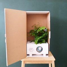 Ogreen Giftbox