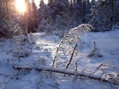 Snow with the sunshine