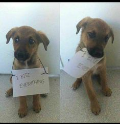 Funny Memes Dog Memes That Are Just Greatest Of All (31+ Pictures)