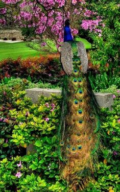 Doesn't this remind you of a Queen with her trailing vestment? Go Peacock Watching at the Los Angeles Country Arboretum Pretty Birds, Beautiful Birds, Animals Beautiful, Nature Animals, Animals And Pets, Cute Animals, Exotic Birds, Colorful Birds, Los Angeles Country