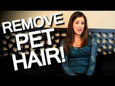 Remove pet hair from all its path of destruction