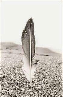 Le plume première création d'Allah. Allah ta3ala lui dit écris. Le qalam (plume) lui dit Seigneur que dois je écrire. Allah swt répond: Écris la destinée de toute chose jusqu'à l heure dernière. ( Abou Dawoud ).