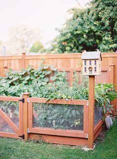 practical raised veg garden for the back yard designed to keep small nibblers out and with an adorable bird house