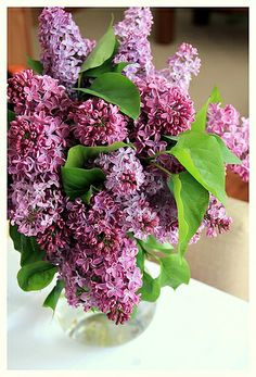 Lilacs by cafe noHut, via Flickr