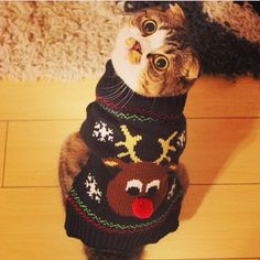 Community Post: Instagram Pets That Don't Seem Enthusiastic About Christmas