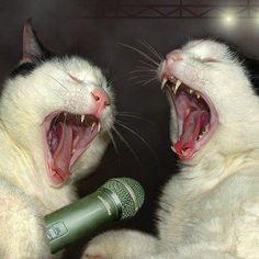Kitty Karaoke