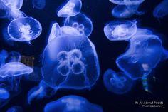 S.E.A. Aquarium at Sentosa Island, Singapore. Read more at http://www.malaysianflavours.com/2013/08/singapore-day-1-s-e-a-aquarium-sentosa-island-singapore.html  #singapore #travel #seaaquarium