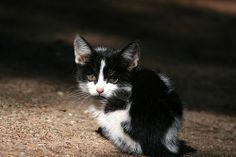 Stray Kitten | Flickr - Photo Sharing!