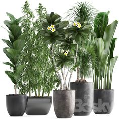 3d models: Indoor - Plant collection 311. Big Potted Plants, Indoor Plants, Ornamental Plants, Foliage Plants, Garden Planter Boxes, Garden Pots, Exotic Plants, Tropical Plants, Small Shrubs