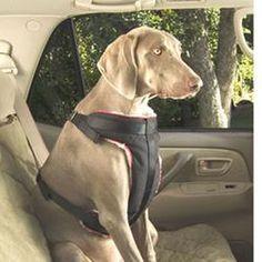 Solvit Vehicle Safety Harness