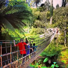 Is This The Longest Rope Bridge in Britain? - The Lost Gardens of Heligan, Cornwall.