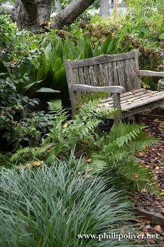 Shady landscaping and other gardening ideas from Phillip Oliver in Florence, Alabama.