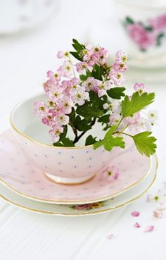 dainty flowers in a teacup