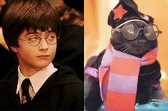 Harry Potter, the cat who lived... nine times.
