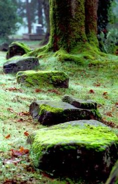 Stone Path Seattle WA