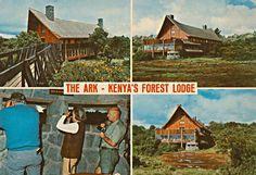The Arc, Forest Lodge Kenya Out Of Africa, East Africa, Nairobi, Historical Photos, Kenya, Places Ive Been, Postcards, Safari, The Past
