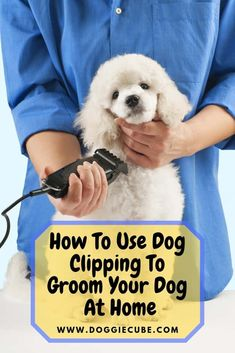 If you want to do dog clipping at home to groom your dog, here are some tips that you may find useful. As his coat grows thicker, you'll need to clip or trim it shorter to keep your dog healthy and properly groomed. Besides haircuts, your dog's nails need Dog Grooming Styles, Dog Grooming Salons, Dog Grooming Tips, Dog Grooming Supplies, Poodle Grooming, Dog Grooming Business, Goldendoodle Grooming, Dog Supplies, Labradoodle