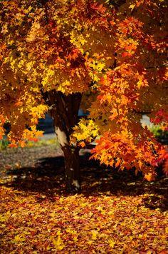 Bäume erscheinen als die persönlichsten Objekte einer Landschaft; wir fühlen uns ihnen zugehörig. John F. Carlson
