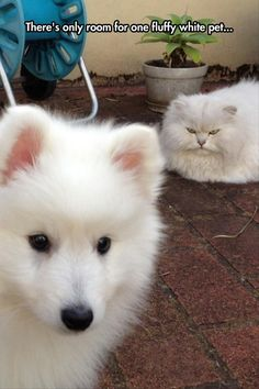 20 Funny Animal Pictures Of The Day
