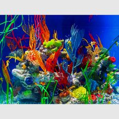 Atlanta aquarium :D