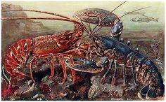 Oldbookillustrations Spiny And Clawed Lobster Paul Flanderky From Brehms Tierleben Animal