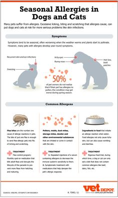 Season Allergies in Dogs and Cats Infographic