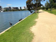 Lakeside in Albert Park is a great spot to run in southern Melbourne, Australia.