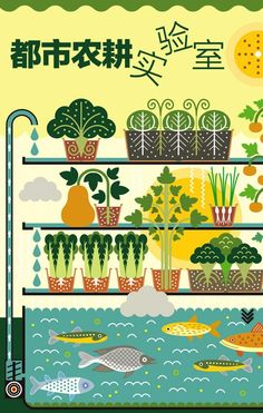 Aquaponics in China - Modern Urban Agriculture, Urban Farming, Backyard Aquaponics, Hydroponics, Expo 2015, Children's Book Illustration, Inspirational Thoughts, Most Beautiful Pictures, Concept