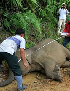 Poachers turn gamekeepers